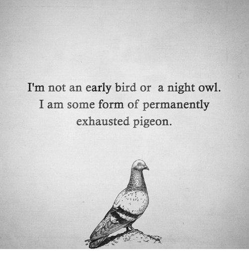 im-not-an-early-bird-or-a-night-owl-i-21011469
